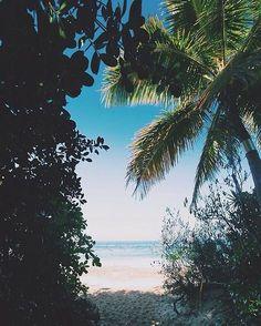 Palm trees summer dream, summer sun, summer of love, summer vibes, wanderlust Tumblr Ocean, Beautiful World, Beautiful Places, Beautiful Scenery, Beautiful Ocean, Magic Places, The Beach, Summer Dream, Summer Sun