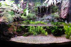 Paludarium Construction Journal. Planted Aquarium, Aquarium Terrarium, Aquarium Setup, Aquarium Design, Turtle Terrarium, Fish Tank Terrarium, Aquariums Super, Aquariums Réservoir, Amazing Aquariums