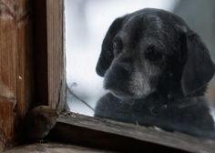 Hund beobachtet Maus durch Fenster- Kai Fagerström hat im ländlichen Süden Finnlands Tiere mit der Kamera eingefangen, die sich ihre Umgebung zurückerobern // geo.de