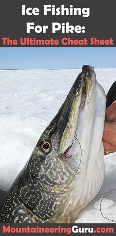 How to Ice Fishing For Pike? By drilling multiple holes and focusing on luring the pike into the hot zone is an effective method many veteran pike fishermen use to catch more pike.