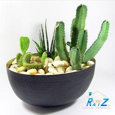 #COCHogar Los #cactus son ideales para embellecer tu #hogar. Quedan bien tanto en #patios y #jardines como en interiores y necesitan pocos cuidados. Colócalas en el lugar adecuado para su crecimiento y así podrás disfrutar posteriormente de su #flor.