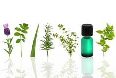 Check out my article on why Thyme Essential Oil can be used for Menstrual Cramps and direction of use.