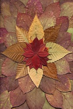 #Autumn #Mandala