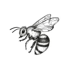 Vector engraving illustration of honey bee on white background Pencil Art Drawings, Art Drawings Sketches, Animal Drawings, Tattoo Drawings, Honey Bee Tattoo, Bumble Bee Tattoo, Bee Sketch, Insect Tattoo, Wasp Tattoo