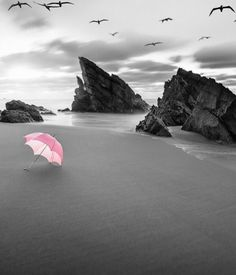 Nice to meet you. Lightroom, Color Splash Photo, Pink Images, Parasol, Dancing In The Rain, Rain Dance, Tropical, Nice To Meet, Black And White Pictures