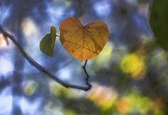 Photograph Heart Leaf by Lou Lu on 500px