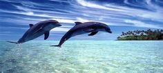 #Scienza, #animali: nuove scoperte sui #delfini