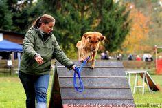 Hundeolympiade 27.10.2012