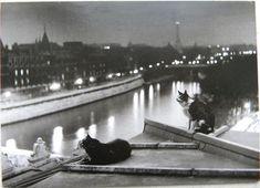 Robert Doisneau, Paris Cats at Night, 1954.