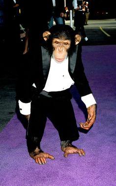 #MichaelJackson Bubbles in a tuxedo!