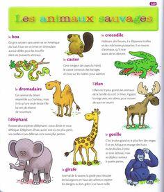 les animaux sauvages 1 Source:  Mon premier dictionnaire de Français Larousse