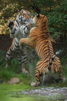 fight by Jutta Kirchner on 500px