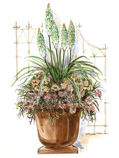 8 Free Plans for Beautiful Container Gardens Container Garden Plans - Even if you don't have a yard, you can plant a container garden. Use these layouts to add beauty to a deck, balcony, or patio. Container Flowers, Container Plants, Container Gardening, Gardening Vegetables, Landscape Plans, Landscape Design, Garden Design, Pot Plante, Foliage Plants