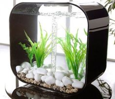 Modern fish tank for office decoration ideas Aquarium Design, Home Aquarium, Aquarium Fish, Aquarium Ideas, Fish Aquariums, Biorb Fish Tank, Modern Fish Tank, Fish Tank Design, Amazing Aquariums