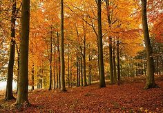 Autumn Colours by Tom Walker