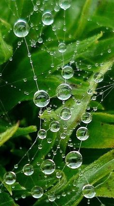 Macro Photography of connected dew drops on a web, nature's precious jewellery (hva)