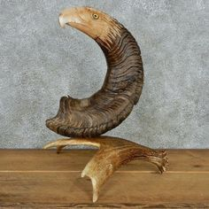 This beautiful hand carved big horn sheep horn is for sale @thetaxidermystore.com.