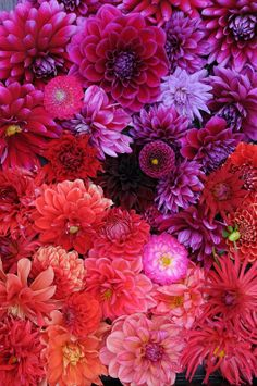 Dahlias. The purple ones are really pretty. Can you order these from work @Joanne Hunter Augustine ?