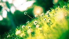 Wild plants, meadow, sunlight, spring wallpaper