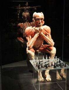"Dr. Gunther von Hagens developed ""plastination"" which is a process designed to preserve the body for educational and instructional purposes. The steps involve embalming, anatomical dissection, removal of body fat and water, forced impregnation of polymer, positioning of the body, and finally, curing or hardening of the body. Hagens exhibits such specimens in his museums and worldwide exhibits called Body Worlds."