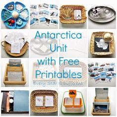 Antarctica Unit w/ Free Printables from Every Star Is Different