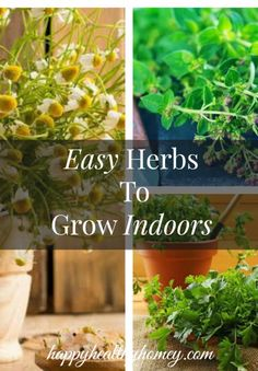 Herbs are so much fun to grow.  Come and browse my favorite easy herbs to grow indoors.