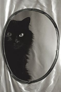Black cat beauty ♥