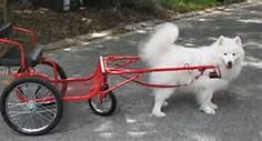 Dog Pulling Cart - Bing Images
