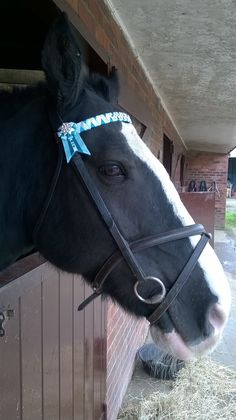 Design your own Ribbon Showing Browband von EHRainbowEquestrian