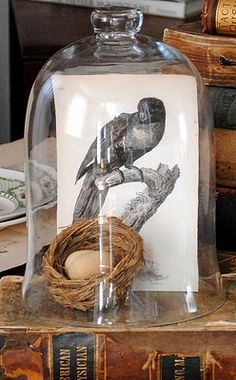 Cloche - bird print , eggs & nest, under a glass dome