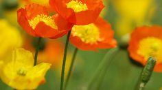 Download Wallpaper ID 865927 - Desktop Nexus Nature