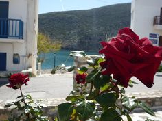 Adonsis Hotel Gardens, Apollon Village, Naxos Island, Greece! #flower #rose #adonishotel #vacation #greekvacation #islandvacation #greekvacations #islandvacations #greekisland #apollon #apollonvillage #seaview #seaviewroom #naxos #naxosisland #greece #peaceful #relaxing #rejuvenating #aegeansea #sea #apollonbeach #hotelroom #hotel #vacationbythesea #traditionalhotel #greekhotel  #mountain #kalogerosmountain #seaview #roomwithseaview #hellas #kyklades #cyclades #travel #lovegreece… Greece, Mountain, Gardens, Sea, Island, Vacation, Flowers, Plants, Travel