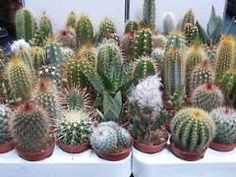 Image result for cactus and cacti in hand crafted pots