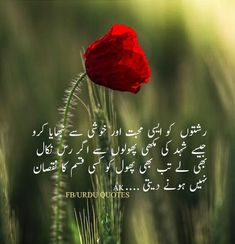 Amna Khan Urdu Quotes, Poetry Quotes, Quotations, Life Quotes, Qoutes, Urdu Poetry Romantic, Love Poetry Urdu, Understanding Quotes, Iqbal Poetry