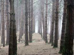 The Pine forest @ Kodaikanal