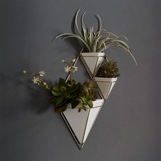 Trig wall planters are storing houseplants and mounted to a wall in a tiny apartment.