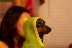 In a covert action wearing a deceptively yellow hoodie, the Daschund eyes the scene & plans his attack.
