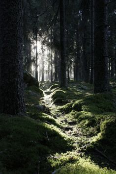 Highlighted Path In The Dark Forrest