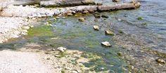 Jak donosi Centrum Badań Fińskiego Instytutu Morskiego, istnieje bardzo poważne ryzyko zaglonienia Bałtyku niebiesko-zielonymi algami. Fińscy eksperci twierdzą, że ryzyko dotyczy całego morza, w tym także części przyległych do Polski.
