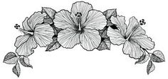 Three hibiscus flower bouquet Stock Photography