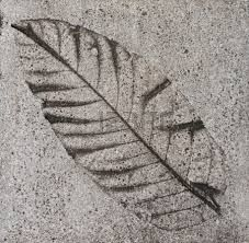 impresion de hojas en piso de cemento - Buscar con Google Leaf Prints, Stepping Stones, Plant Leaves, Cement Floors, Concrete, Plants, Tiles, Google Search, Cement Leaves