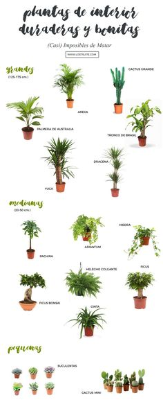 All Details You Need to Know About Home Decoration - Modern Inside Garden, Inside Plants, Interior Garden, Interior Plants, Indoor Garden, Garden Plants, Planting Succulents, Planting Flowers, Suculentas Interior