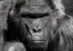 La mitad las especies desaparecerán a finales de siglo según los científicos