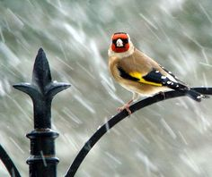 Bird in Bad Weather | Content in a Cottage