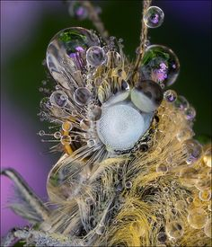 astonishing-butterfly with dew. Peter Garvenovic