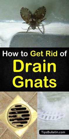 Learn how to get rid of drain gnats at home with these simple methods. Use everyday ingredients like vinegar, baking soda, and bleach to effectively kill these tiny, flying pests. These simple pest control methods will effectively eliminate drain gnats. Household Cleaning Tips, Deep Cleaning Tips, Toilet Cleaning, House Cleaning Tips, Diy Cleaning Products, Cleaning Hacks, Bathroom Cleaning, Cleaning Sink Drains, Cleaning Appliances