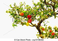 frutas de bonsai - Pesquisa Google