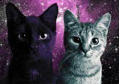 「space cat」の画像検索結果
