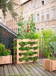 Le potager vertical, l'autre solution pour cultiver fruits et légumes sur le balcon. Potager vertical en pin douglas PEFC non traité avec feutre de plantation, prix : 118 euros, chez Botanic