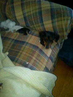 what ?!!? I'm comfy